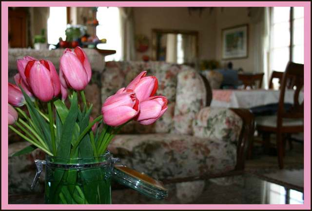 Tulips in the Living Room of Fayence France